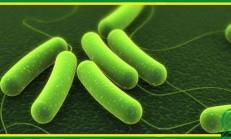 Bagisiklik sistemini guclendiren probiyotikler mi ? Bitkiler mi?